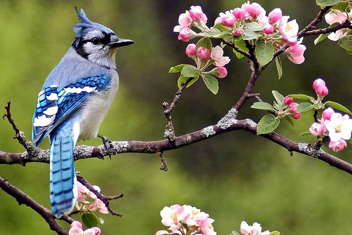 Blue Jays Kz Rv